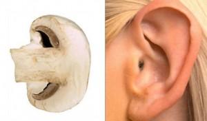 gljiva uho