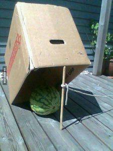 lubenica kao mamac