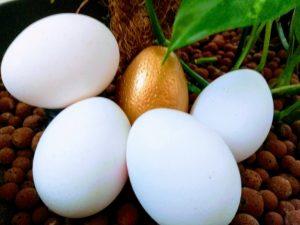 zlatna jaja